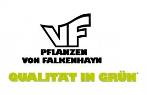 von Falkenhayn