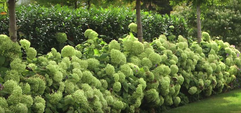 Pflanzen richtig kombinieren