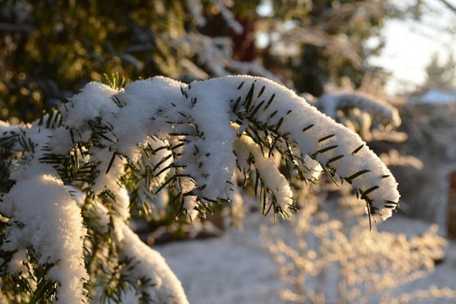 So überleben Ihre Pflanzen den Winter